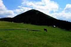 Pasturage горы стоковая фотография rf