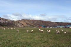 Pasture для овец в деревне Камерона tierra del fuego Стоковая Фотография