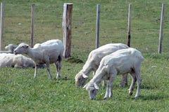 Pasture для овец в деревне Камерона tierra del fuego Стоковые Изображения RF