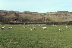 Pasture для овец в деревне Камерона tierra del fuego Стоковая Фотография RF