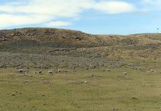 Pasture для овец в деревне Камерона tierra del fuego Стоковые Фото