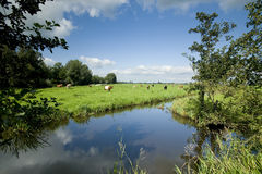 Pasture. Typical dutch landscape of pasture Stock Image