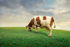 Pasture Royalty Free Stock Photo