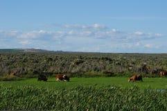 Pasture Stock Photo