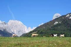 Pasture Royalty Free Stock Image