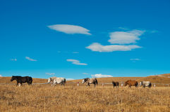 Pasture. The horses in the broad pasture Stock Image
