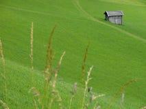 Pasture. Green Alps summer in Austria stock photos
