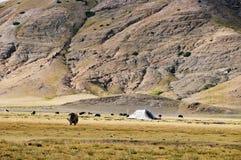 Pasture Stock Image
