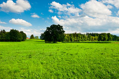 Pasture Royalty Free Stock Image