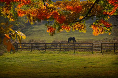 Pasture. A horse in the pasture with Autumn colors stock photography