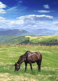 Pasture. Colourful picture of horse pasturing on the meadow Stock Photography