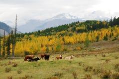 Pasture Stock Photography