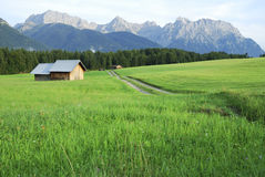 Pasture in the alps Stock Images