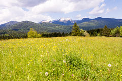 Pasture in the alps of Bavaria Royalty Free Stock Images