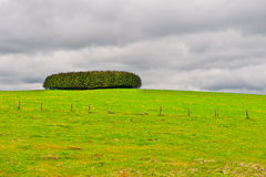 Pasture in the Ardennes Royalty Free Stock Images