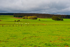Pasture in the Ardennes Stock Photo