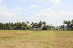 Pasture on background of palm Royalty Free Stock Images