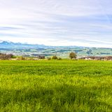 Pasture on the background of snow-capped Alps. In Switzerland. Swiss small town at the foot of mountains surrounded by meadows Royalty Free Stock Image