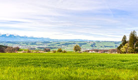 Pasture on the background of snow-capped Alps. In Switzerland. Swiss small town at the foot of mountains surrounded by meadows Royalty Free Stock Photos