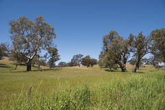 Pasture Barossa Valley, Australia Royalty Free Stock Photo