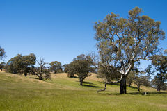 Pasture Barossa Valley, Australia Stock Images
