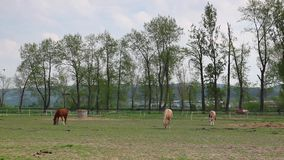 On the pasture stock video footage