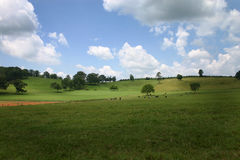 Pasture with blue sky Stock Photos