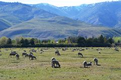 Pasture in Carson City, Nevada Royalty Free Stock Photo