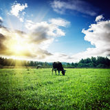 Pasture and clouds Royalty Free Stock Photography