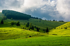 Pasture with cows in Austria Royalty Free Stock Photo
