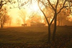 Pasture. Cows on pasture autumn morning lights Stock Photos