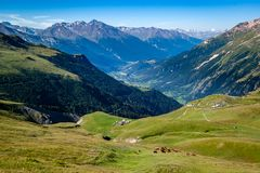 Pasture with cows and beautiful alpine valley in Vanoise. stock image