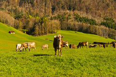 Pasture Stock Images