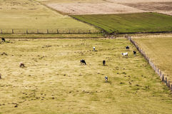 Pasture Stock Photos