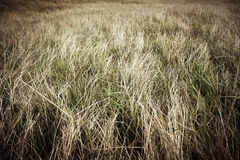 Pasture with dry grass Royalty Free Stock Image