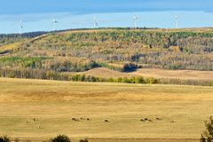 Pasture in fall with horse and wind turbines Royalty Free Stock Images