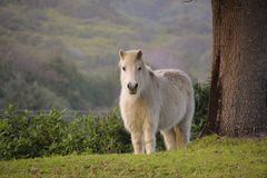 Pasture, Fauna, Horse Like Mammal, Wildlife stock photo