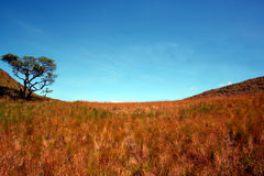 Pasture Field. Medow with tree and blue sky Royalty Free Stock Photography