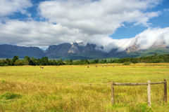 Pasture fields in front of amazing mountains. In snow white cloud. Shot in Vergelegen estate area, Hottentots Holland Mountains, near Somerset West, Western Royalty Free Stock Photo