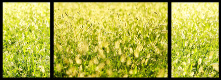 Pasture fields inspire peace and relaxation. Pasture fields inspire  relaxation and peace Royalty Free Stock Photo