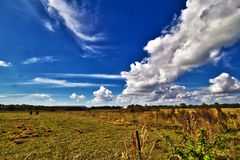 Pasture in Florida Royalty Free Stock Images
