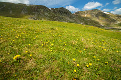 Pasture with flowers near the mountains Stock Image