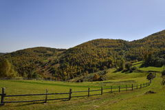Pasture and forest at the beginning of autumn in Romania Stock Image