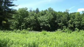 Pasture in a forest stock footage