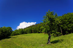 Pasture in the French Alps Stock Photos