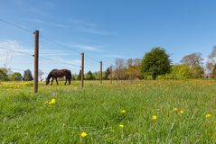 Pasture, Grassland, Meadow, Field Royalty Free Stock Photos