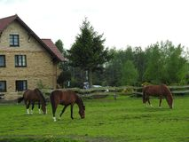 Pasture, Grazing, Horse, Mare Royalty Free Stock Image