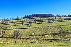 Pasture on the hill. Meadows and pasture area at the top of Sudety mountains in Poland Royalty Free Stock Photography