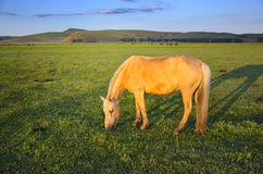 Pasture Horses Royalty Free Stock Image