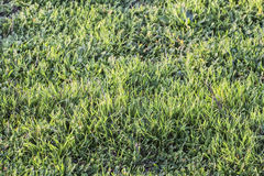 Pasture Imbued With Sunlight. Photograph of pasture with blades of grass imbued with the late afternoon sunlight Stock Image